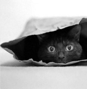 """""""Кот в мешке"""" или """"Моя работа похожа на..."""""""