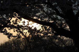 Вечерний обзор и обзор субличностей